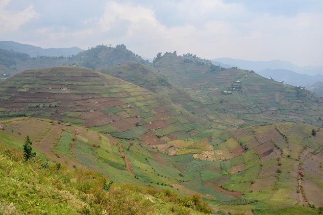 Near Kisoro, SW Uganda. Cultivated to the last corner.