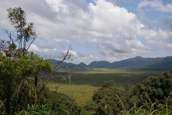 Marshland in the wonderful Nyungwe forest area, Rwanda