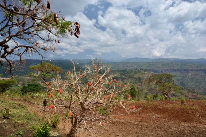 Mount Elgon, Africa's fourth highest mountain, from Sipi