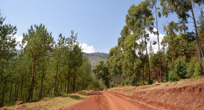 Forests on the Suam road